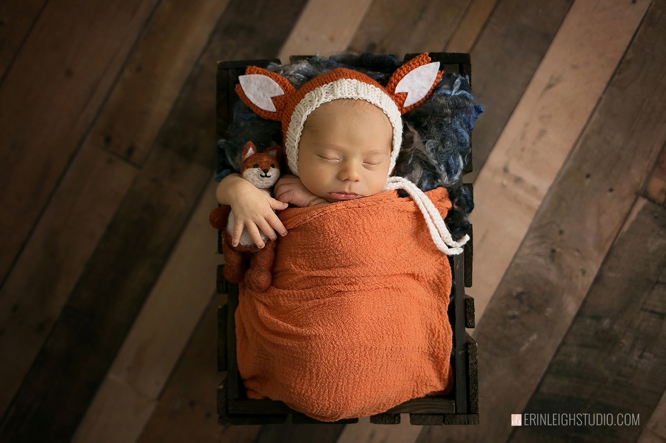 fox newborn photography